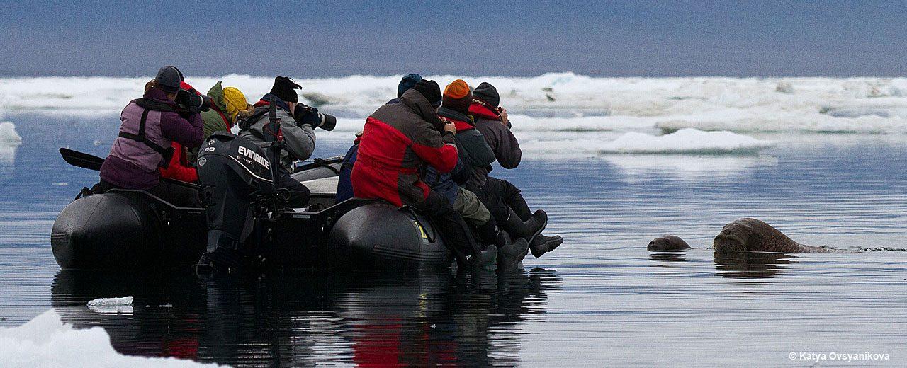 Arctic_TOTW_shooting_walrus