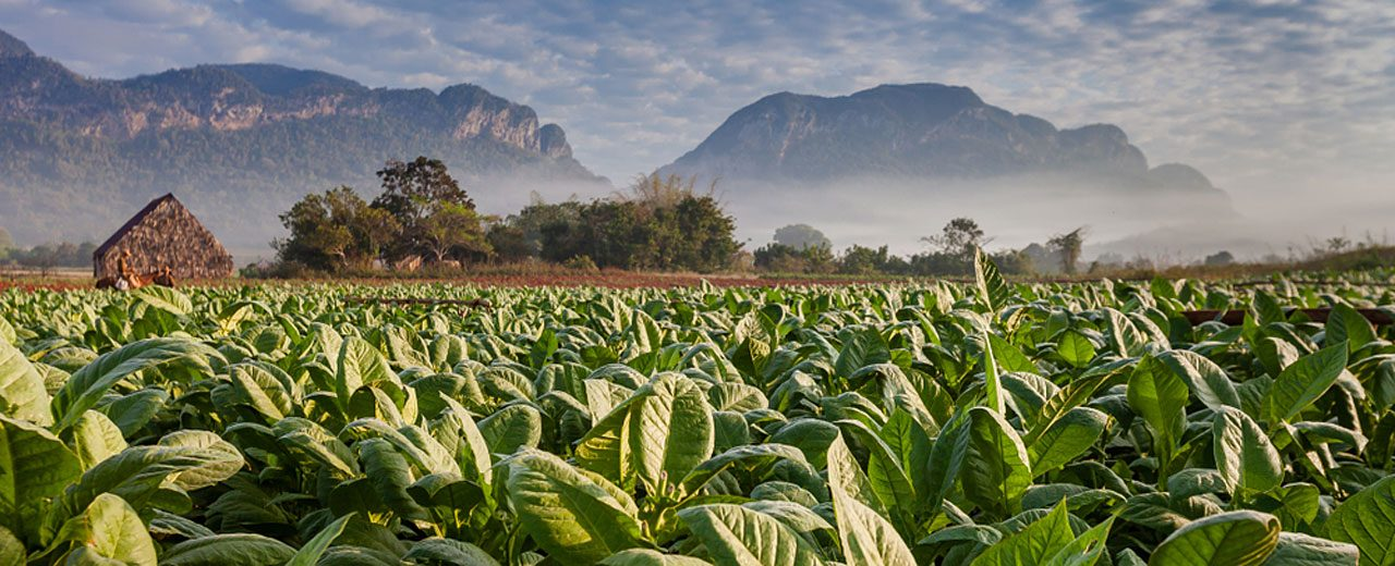 Cuba_Vineales_Tobacco-Field-and-plantation