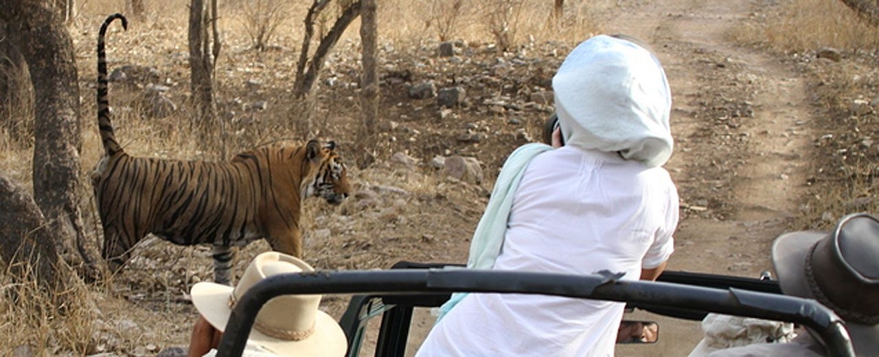 India: Bengal Tiger Safari