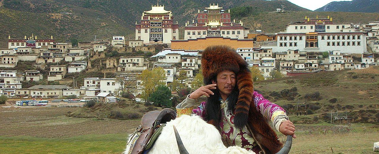 Yunnan_Shangri-la-Yak
